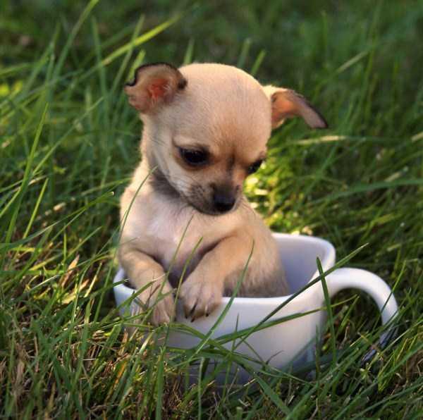 cute-animals-in-cups (44)