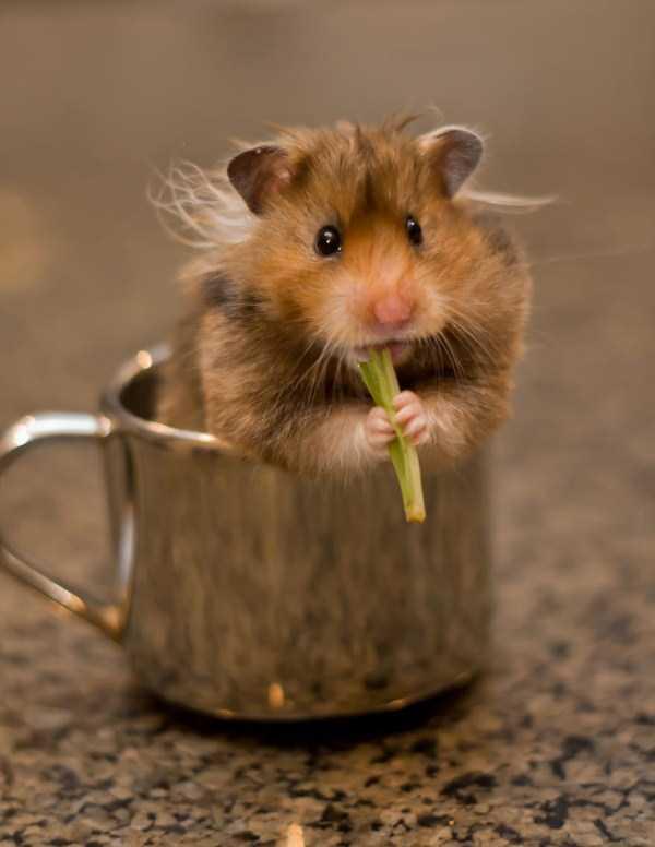 cute-animals-in-cups (46)