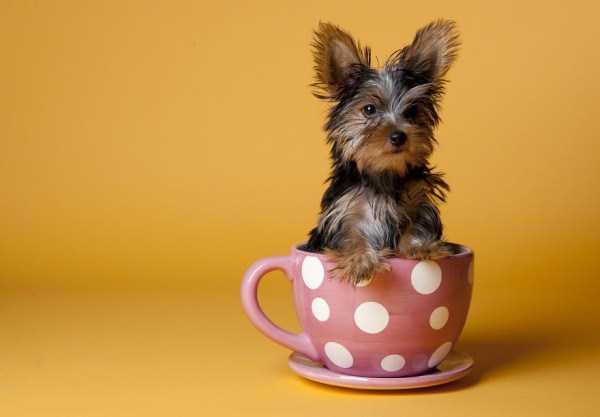 cute-animals-in-cups (47)