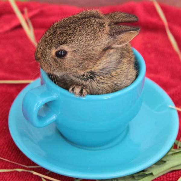 cute-animals-in-cups (48)