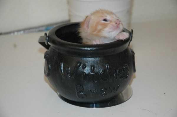 cute-animals-in-cups (49)