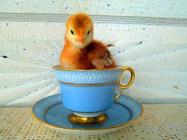 cute-animals-in-cups (51)