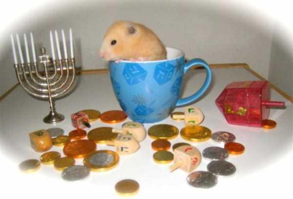 cute-animals-in-cups (52)