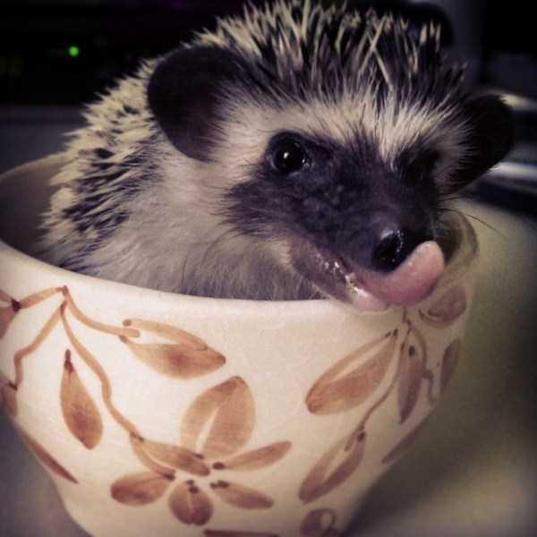 cute-animals-in-cups (53)