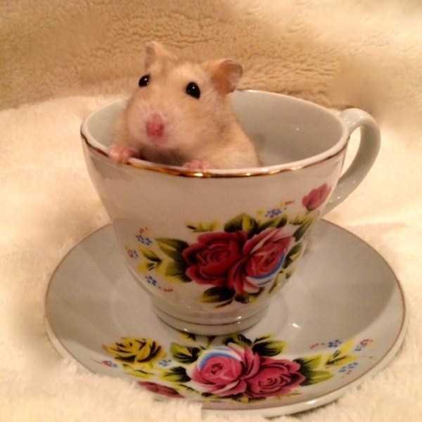 cute-animals-in-cups (54)