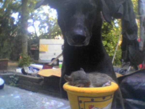 cute-animals-in-cups (55)