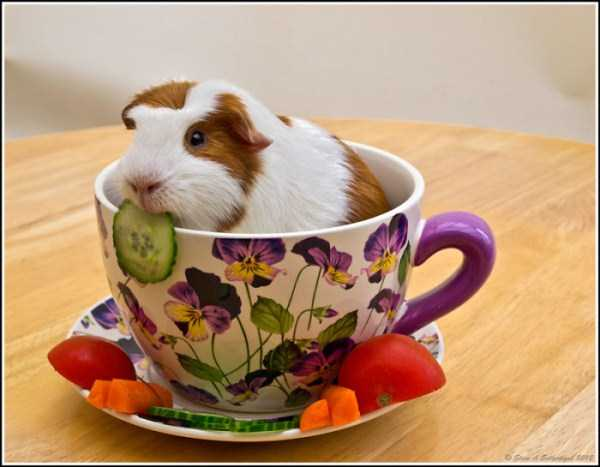 cute-animals-in-cups (57)