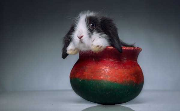 cute-animals-in-cups (58)