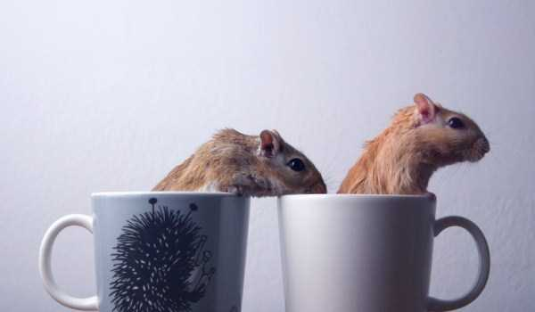 cute-animals-in-cups (59)