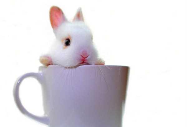 cute-animals-in-cups (6)