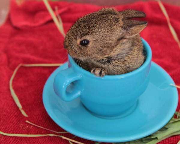 cute-animals-in-cups (60)