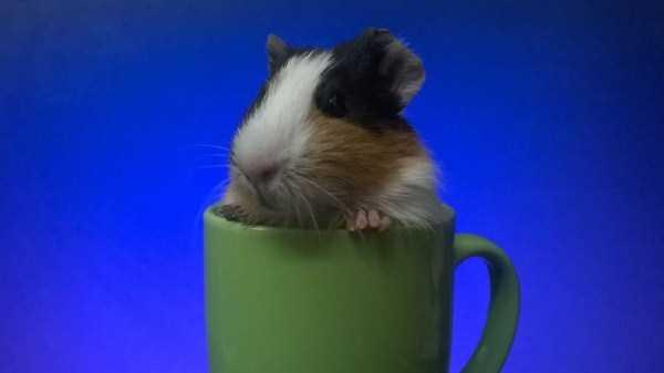 cute-animals-in-cups (62)