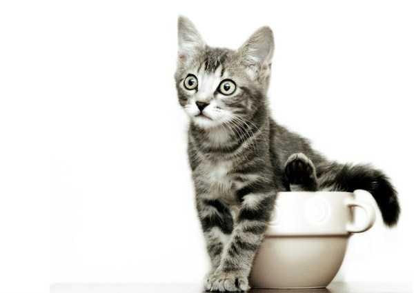 cute-animals-in-cups (7)