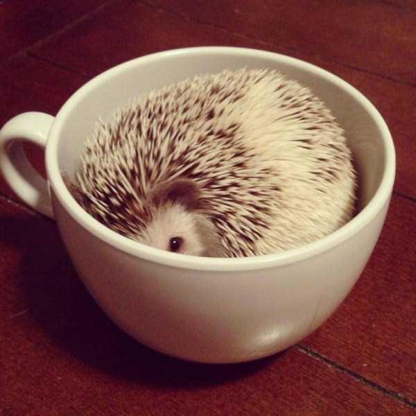 cute-animals-in-cups (9)