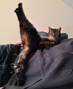 Adorable Cats in Funny Situations (37 photos) 12
