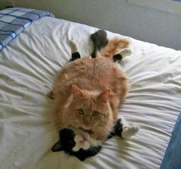 funny-cats (13)