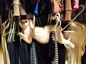 Adorable Cats in Funny Situations (37 photos) 2