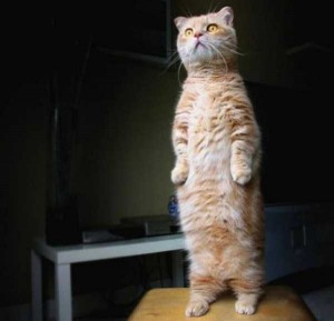 Adorable Cats in Funny Situations (37 photos) 33