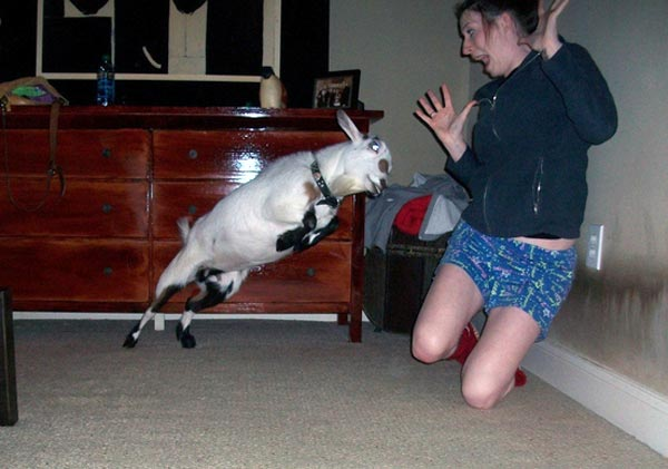 Perfectly Timed Photos (25 photos) 22