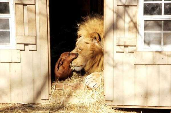 unlikely-animal-friendships (1)