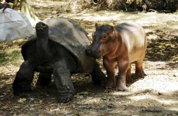 unlikely-animal-friendships (10)