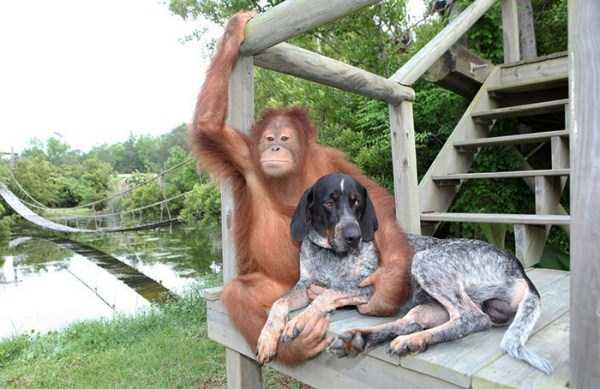 unlikely-animal-friendships (11)