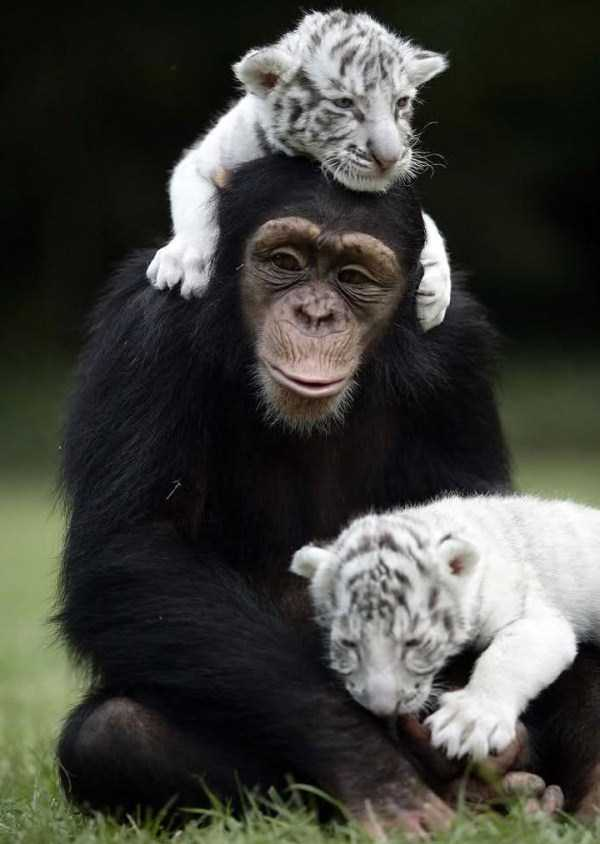 unlikely-animal-friendships (15)