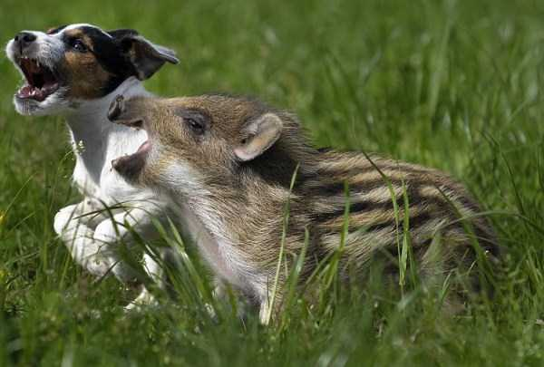 unlikely-animal-friendships (2)