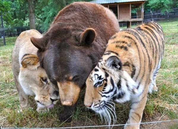 unlikely-animal-friendships (22)