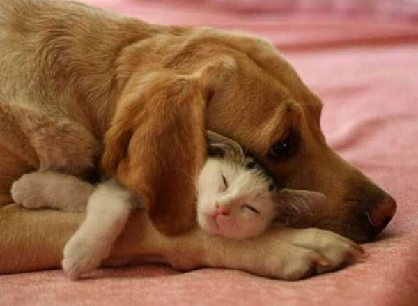 unlikely-animal-friendships (23)