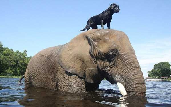 unlikely-animal-friendships (25)