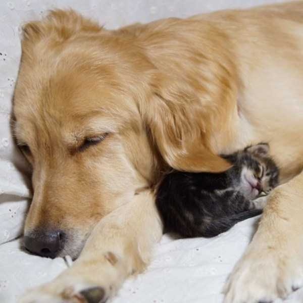 unlikely-animal-friendships (28)