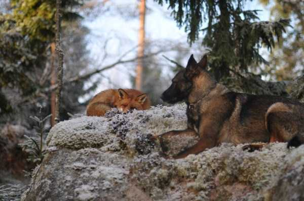 unlikely-animal-friendships (4)