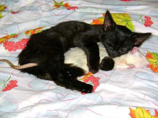 unlikely-animal-friendships (46)