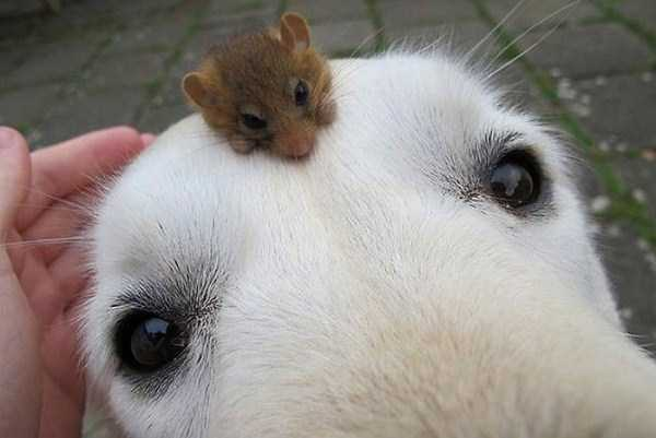 unlikely-animal-friendships (47)