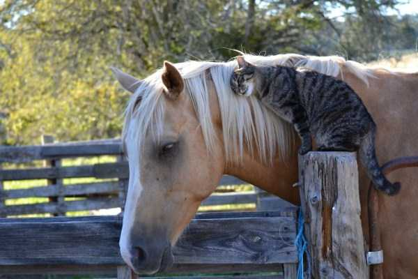 unlikely-animal-friendships (5)