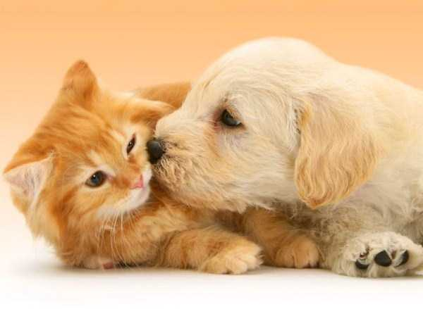 unlikely-animal-friendships (50)