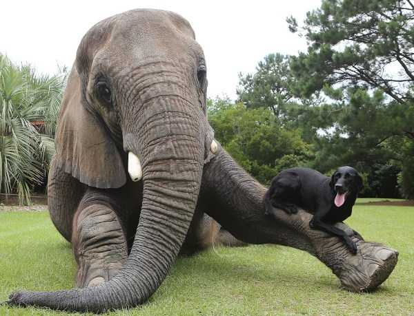 unlikely-animal-friendships (51)