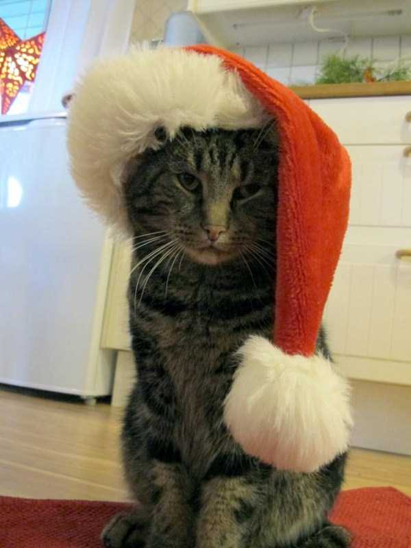 animals-who-hate-holidays (1)