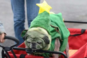 Animals Who Just Don't Care About Christmas (32 photos) 10