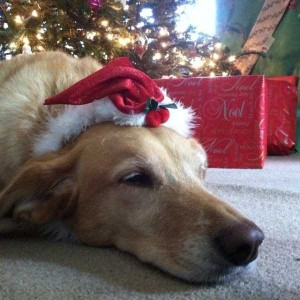 Animals Who Just Don't Care About Christmas (32 photos) 13