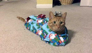 Animals Who Just Don't Care About Christmas (32 photos) 14