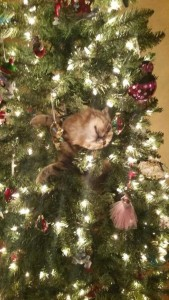 Animals Who Just Don't Care About Christmas (32 photos) 15