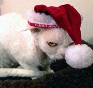 Animals Who Just Don't Care About Christmas (32 photos) 16
