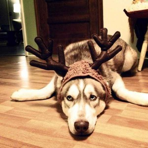 Animals Who Just Don't Care About Christmas (32 photos) 18