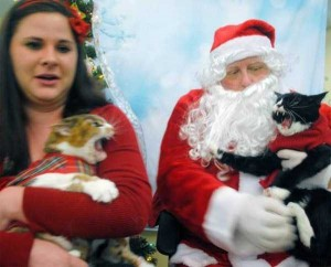 Animals Who Just Don't Care About Christmas (32 photos) 20