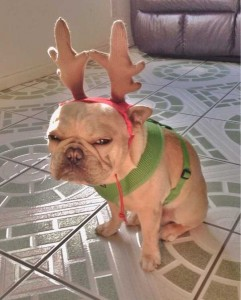 Animals Who Just Don't Care About Christmas (32 photos) 21