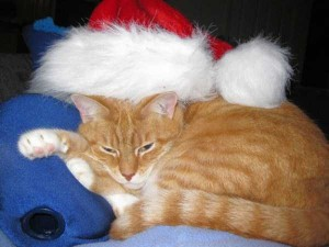 Animals Who Just Don't Care About Christmas (32 photos) 23