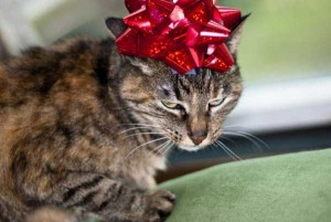Animals Who Just Don't Care About Christmas (32 photos) 25