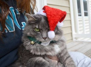 Animals Who Just Don't Care About Christmas (32 photos) 27